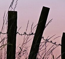 Sunrise in the country with barbed wire by alicara
