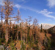 Autumnal woods II by zumi