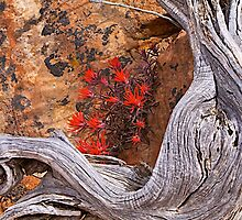 Art and Nature by John Butler