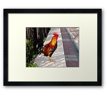 What's about all the Roosters in Key West, Florida Framed Print
