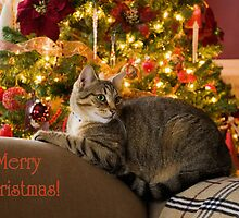 Christmas Kitty  by Tracy Riddell