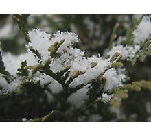 First snowfall of the year. Photographic Print