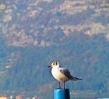 Seagull at pier by alicara