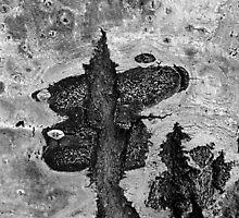 Dragon Flies by Chris Whitney
