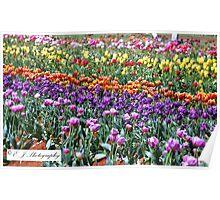 Tiptoe Through The Tulips.. Poster