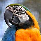 Beak- With Bird Growing On It by Lance Leopold