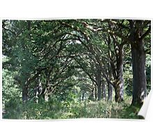 Wood pasture with old oaks Poster