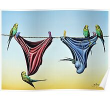 Double Budgie Smugglers Poster