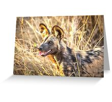 Alert African Wild Dog Greeting Card