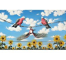 What A Galah Photographic Print