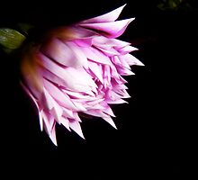 Shades of Pink in the Dark. by Gabrielle  Hope