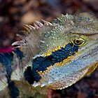 Dragon!.. lizard by Adam Wakefield