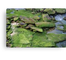 Emerald Veneer Canvas Print