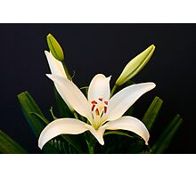 Floral Portrait Photographic Print