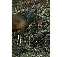 Bodmin Moor Pony Photographic Print