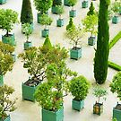 Potted Patterns by ColeCollection