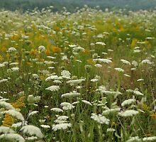 Wildflowers by murrstevens