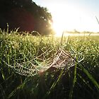 Sunrise Spider's Web, Salisbury by Ian Bracey