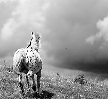 Running Horse by Sandy Taylor