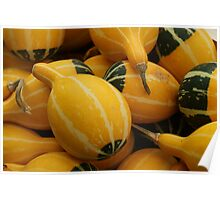 yellow gourds Poster