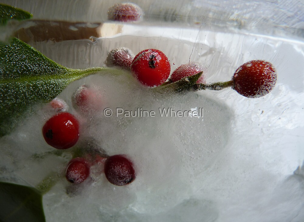 Holly berries and that special Christmas light by © Pauline Wherrell
