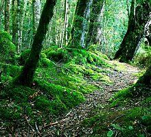 Woodland New Zealand by John Wallace