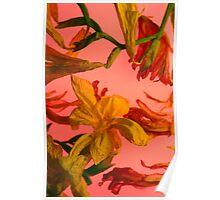 Fresia Pink I Poster