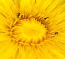Dandelion Hunt by Jodi Turner