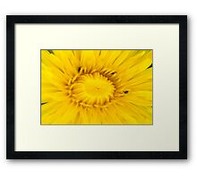 Dandelion Hunt Framed Print