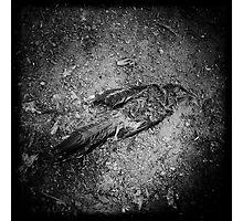Bye Bye Birdy Photographic Print
