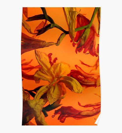 Fresia Orange Poster