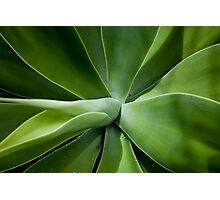 Agave abstract Photographic Print