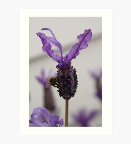 Lavender Luncheon Art Print
