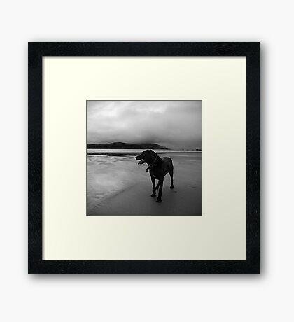 zed the black Framed Print