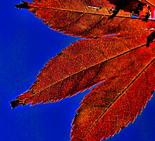 Red Maple Leaf Blue Sky by bryanbellars