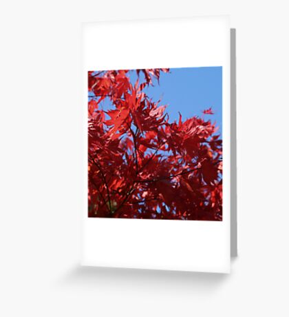 Japanesse Maple Leaves  Greeting Card