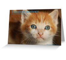 Little kitty cover calendar Greeting Card