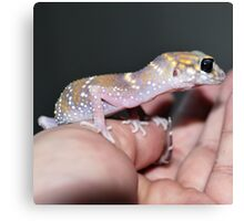 Me Lady - Hypo Thick-Tailed Gecko Canvas Print