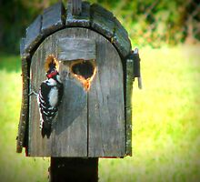 Look Whats Happening To My Mail Box by Linda Miller Gesualdo
