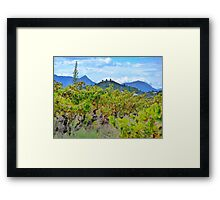Vineyard with a view Framed Print