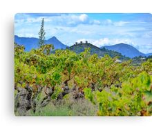 Vineyard with a view Canvas Print