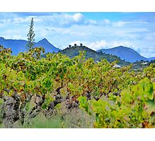 Vineyard with a view Photographic Print