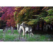 unicorns Photographic Print