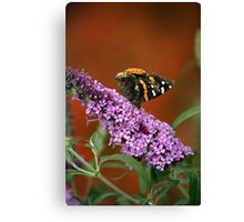 Red Admiral on Butterfly Bush Canvas Print