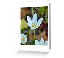 Autumn Zephyr Lily Greeting Card