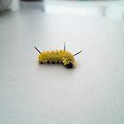 Fuzzy Wuzzy by sagemountain