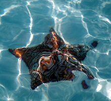 Sandy Star by Carol Barona