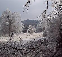 Frozen fields, Fayetteville Arkansas by David  Hughes