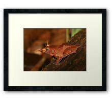 Solomon Eyelash Frog Framed Print