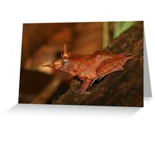 Solomon Eyelash Frog Greeting Card